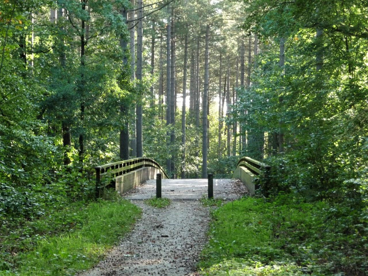 woods_